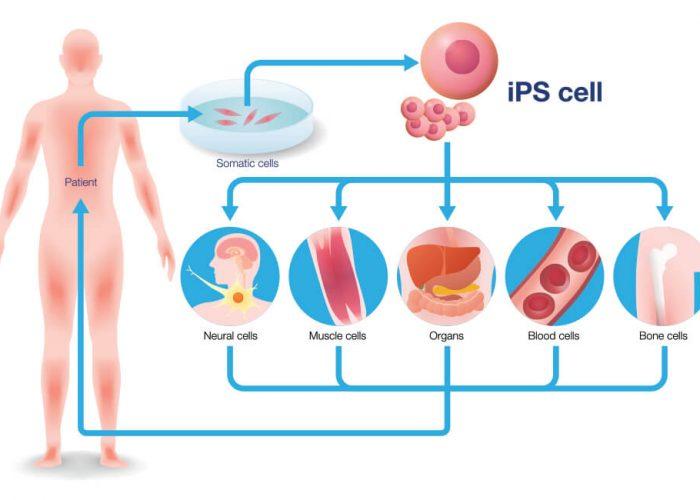 ipsc21-ipsc-inducedpluripiotent-stem-cells-ipsc-differentiation